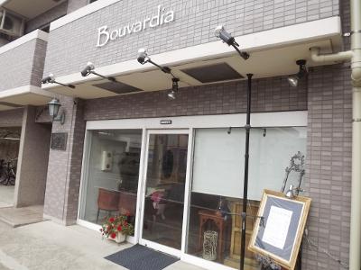 Bouvardia3