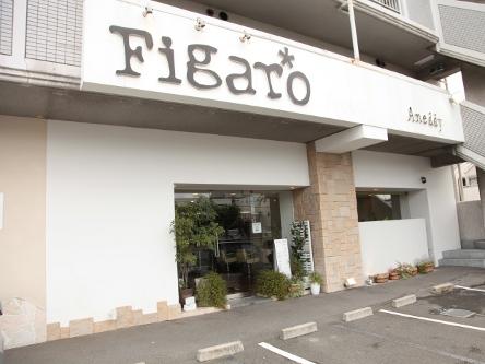 Figaro -Aneddy-3