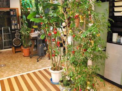 美容室薔薇の部屋2
