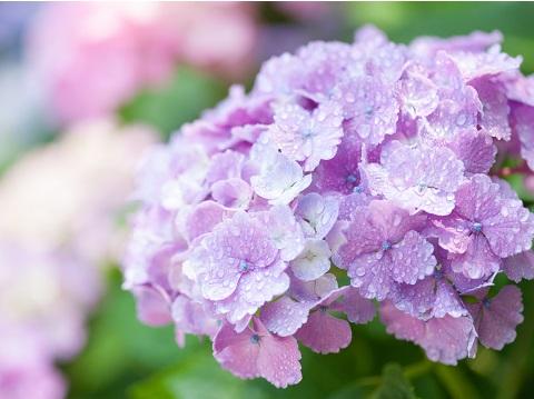 雨の日だって油断できない!6月の紫外線は冬の6倍!?
